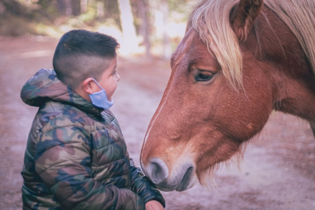 Terapia online para niños. Un niño y un caballo